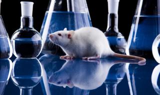 O uso de animais em pesquisas e testes científicos no Brasil.